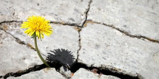 Nature Résiliente, imittons la Nature et soyons ce pissenlit qui pousse au milieu du béton